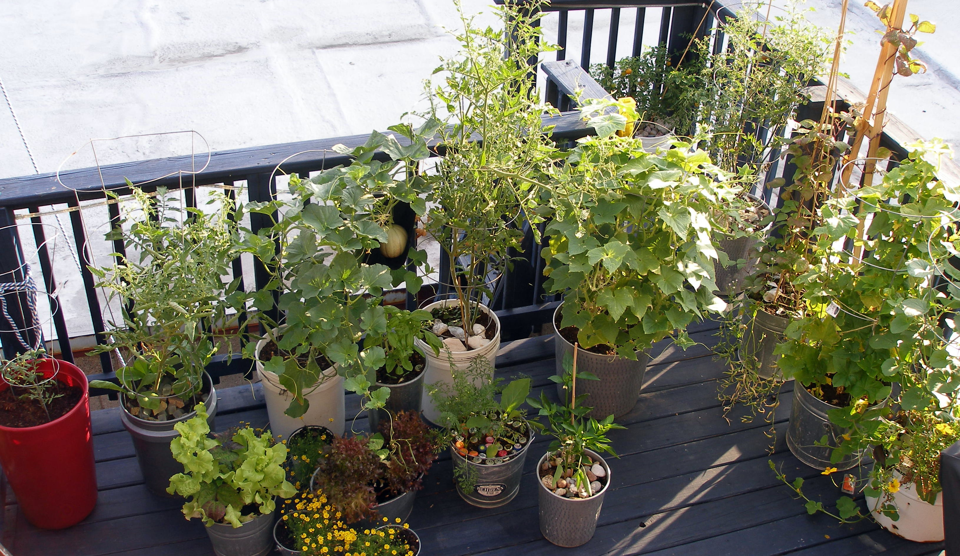 deck plants Part - 4: attractive deck plants idea