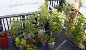 July 2010 Plants on Deck