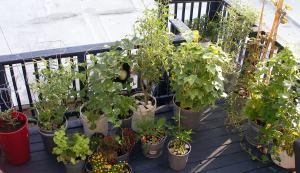 July 2010 Plants on Deck