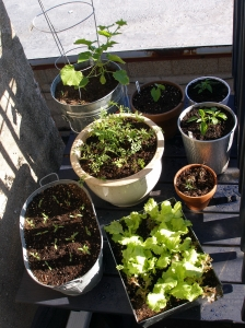 Plants On Deck May 2010