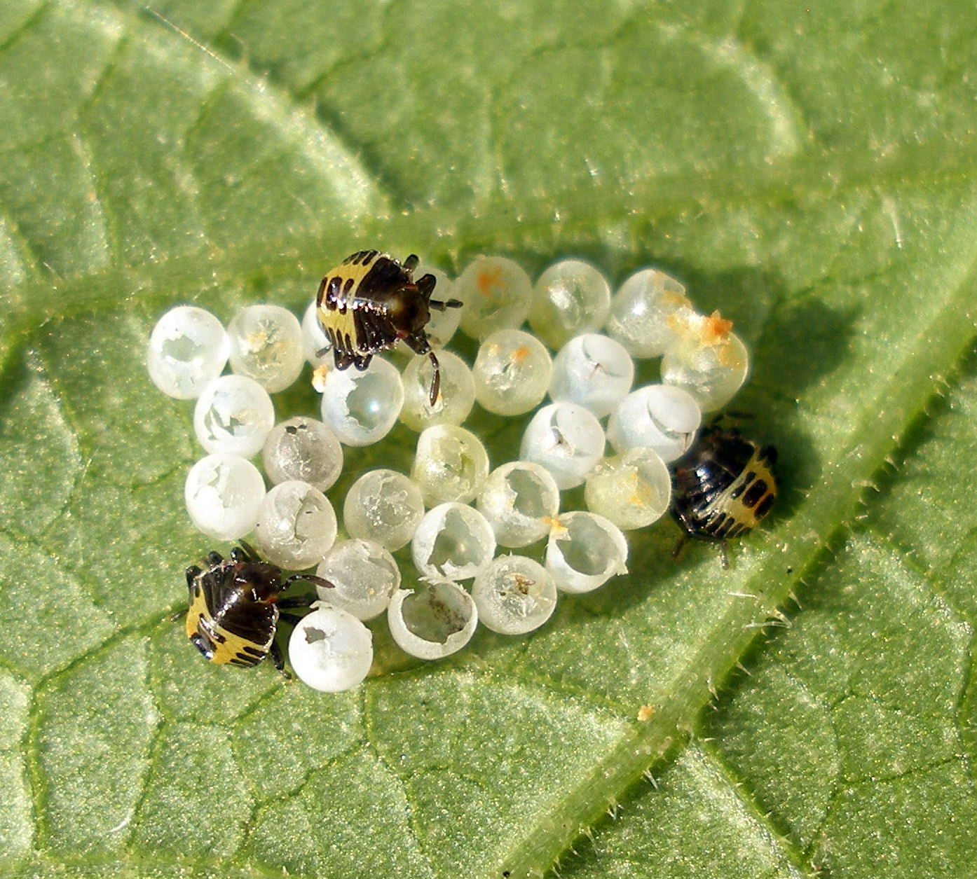 Image Result For Controlling Aphids