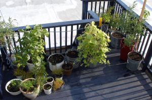 August Plants on Deck