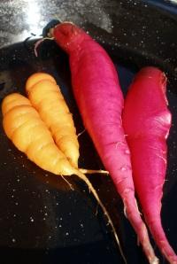 Long Scarlet radish and Scarlet Nantes carrot