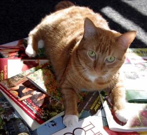Loretta Likes Seed Catalogs, Too