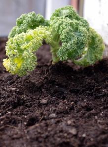 Heroic Kale