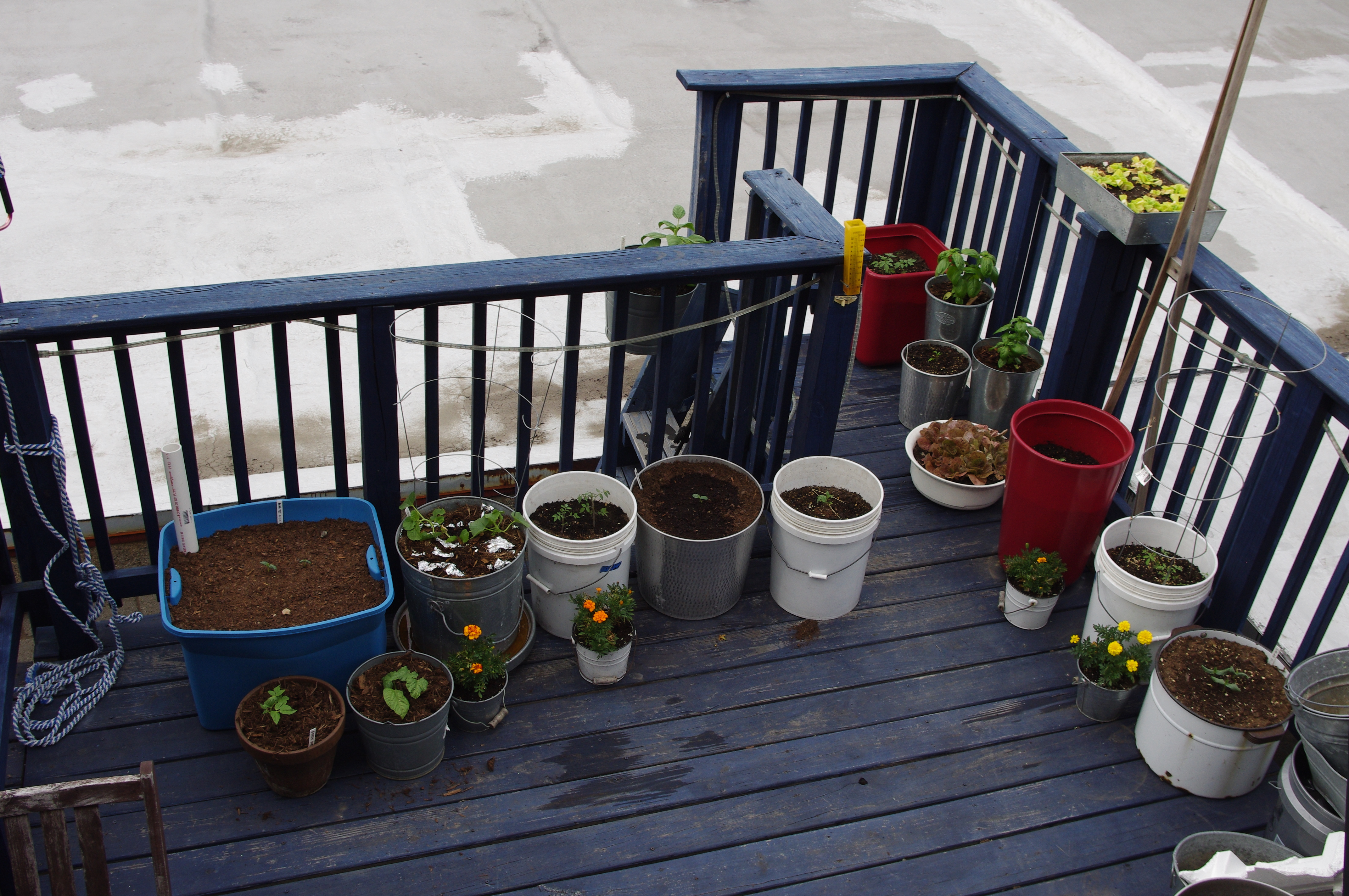 What Plants Will Grow Under A Deck : Under the deck but for now things are growing slowly on