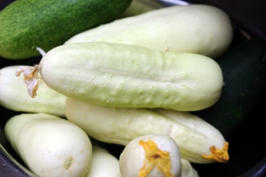 plants on deck cucumbers, White Wonder