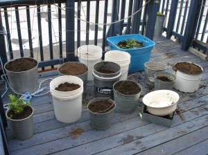 Plants on Deck May 2012
