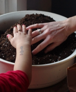 planting pea shoots