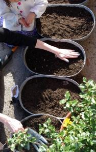 preps the soil