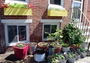52614_plantsoutfront