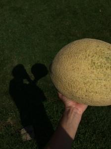71615_melon