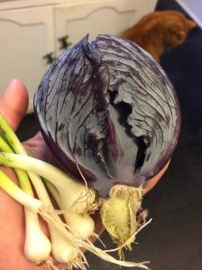 cabbageandwild onion