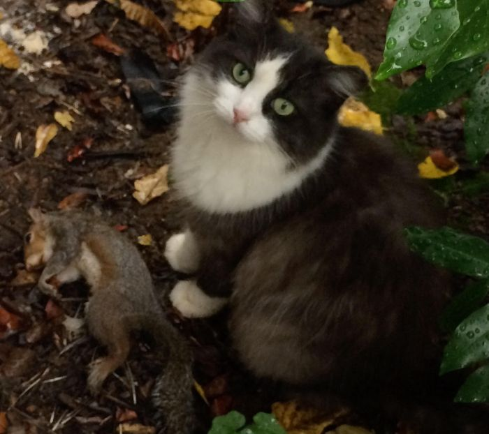 garden cat gets the squirrel